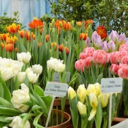 Выставка тюльпанов «Мечты о весне» 2019