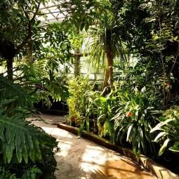День защитника Отечества в Ботаническом саду 2017