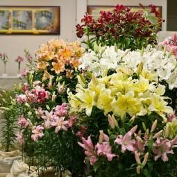 Цветочная выставка «Краски лета» в Ботаническом саду 2017