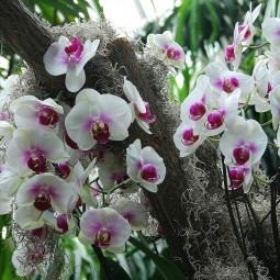 Выставка орхидей в Ленинградском Зоопарке