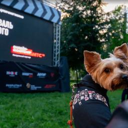 Фестиваль уличного кино 2020