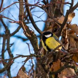 Фотоконкурс «Птичий бум»