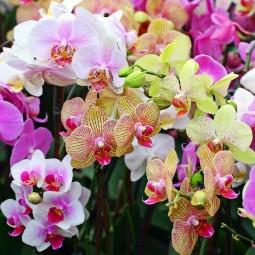 Выставка орхидей «Осколки радуги» 2018