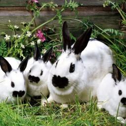 Фестиваль-выставка «Кролики»