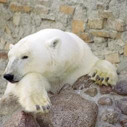 День Рождения белой медведицы Услады 2019