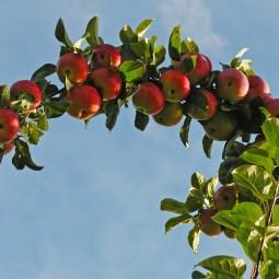 Праздник «Яблочный полдень» в Царском Селе 2018
