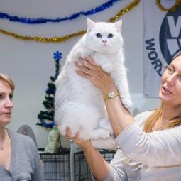 Международная выставка-продажа кошек «В гостях у Саффи»
