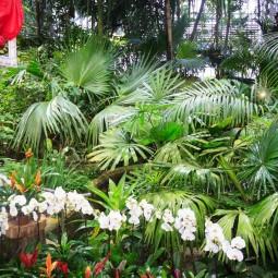 Новогодние каникулы в Ботаническом саду 2018