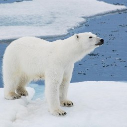 День белого медведя в Ленинградском зоопарке 2017