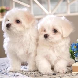 Фестиваль «Маленьких собачек»