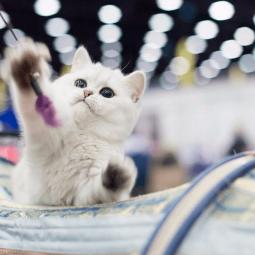 Выставка «Мир кошек- 2021»