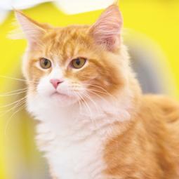 Выставка «Мир кошек»  2018