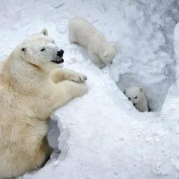 День Белого медведя на ледоколе Красин  2020