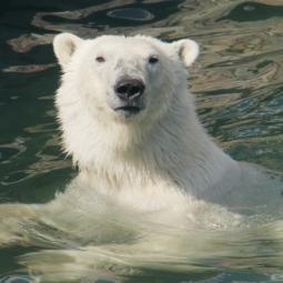 День рождения Ленинградского зоопарка 2021