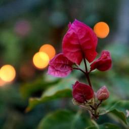 Новогодние выходные в Ботаническом саду 2021