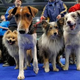 Выставка «Мир собак»