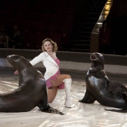 Цирковое шоу морских животных «Морской круиз»
