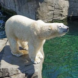 Международный День белого медведя в Ленинградском зоопарке 2019