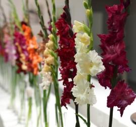 Фестиваль цветов в Ботаническом саду 2017