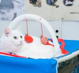 Выставка кошек «В Гостях у САФФИ» 2017