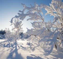 Топ-10 интересных событий в Санкт-Петербурге на выходные 19 и 20 января