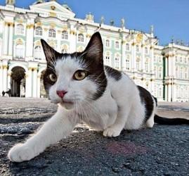 «День эрмитажного кота» 2017