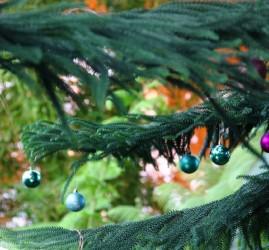 Экскурсии  «Новогодние растения мира»