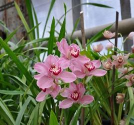 Выставка орхидей «Осколки радуги» 2017
