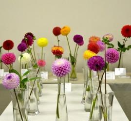 Выставка «Краски лета: гладиолусы и георгины»