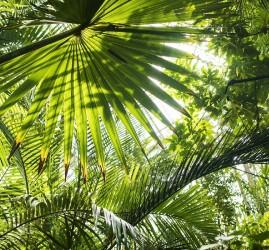 Экскурсия «Тропический маршрут»