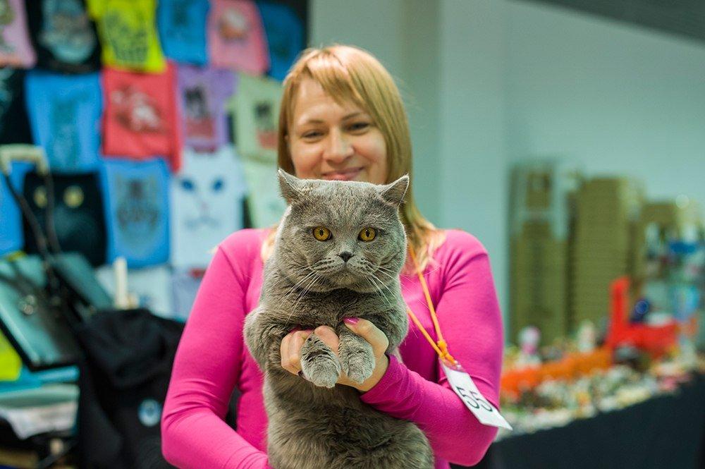 Международная выставка-продажа кошек «В гостях уСаффи»