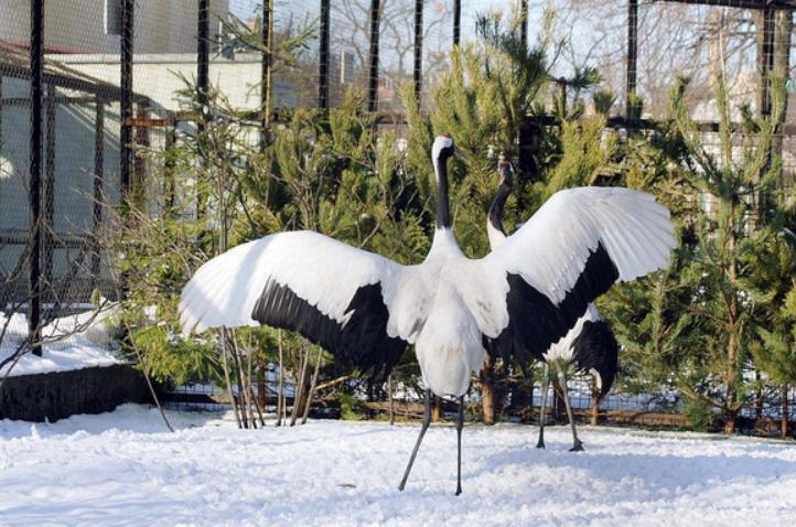 День всех влюбленных вЛенинградском зоопарке 2019