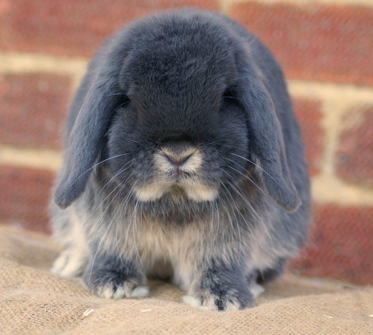 Фестиваль-выставка «Декоративные Кролики»