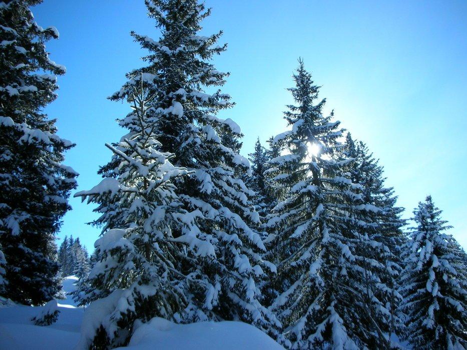 Всероссийский День снега врамках «Лыжных стрел» 2018