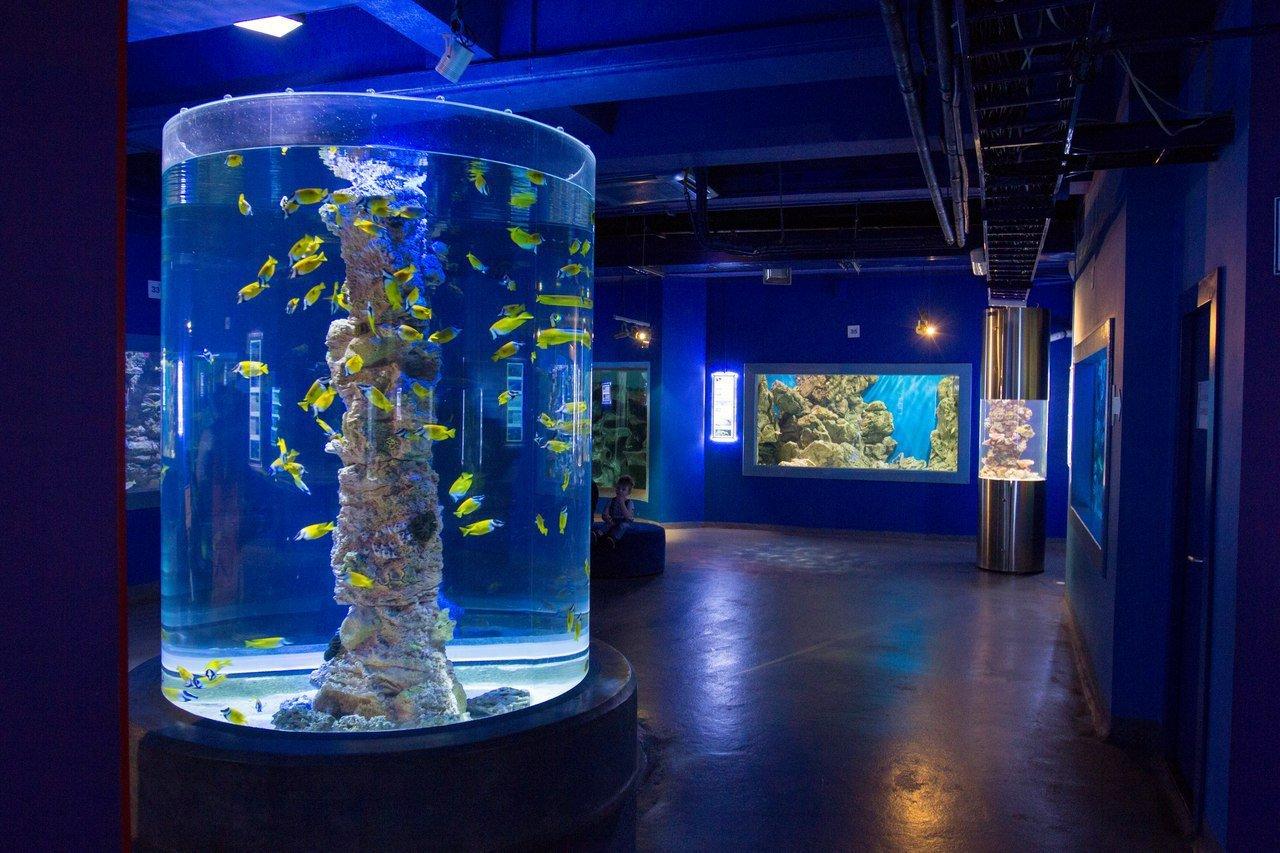 Выставка рыбок-петушков вОкеанариуме