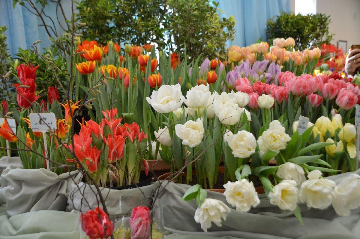 Выставка тюльпанов «Мечты овесне»