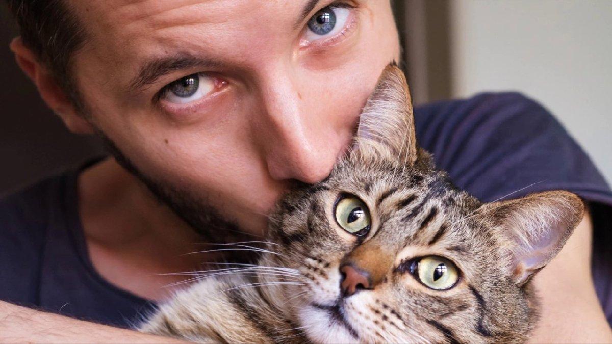 Кошки с людьми картинки