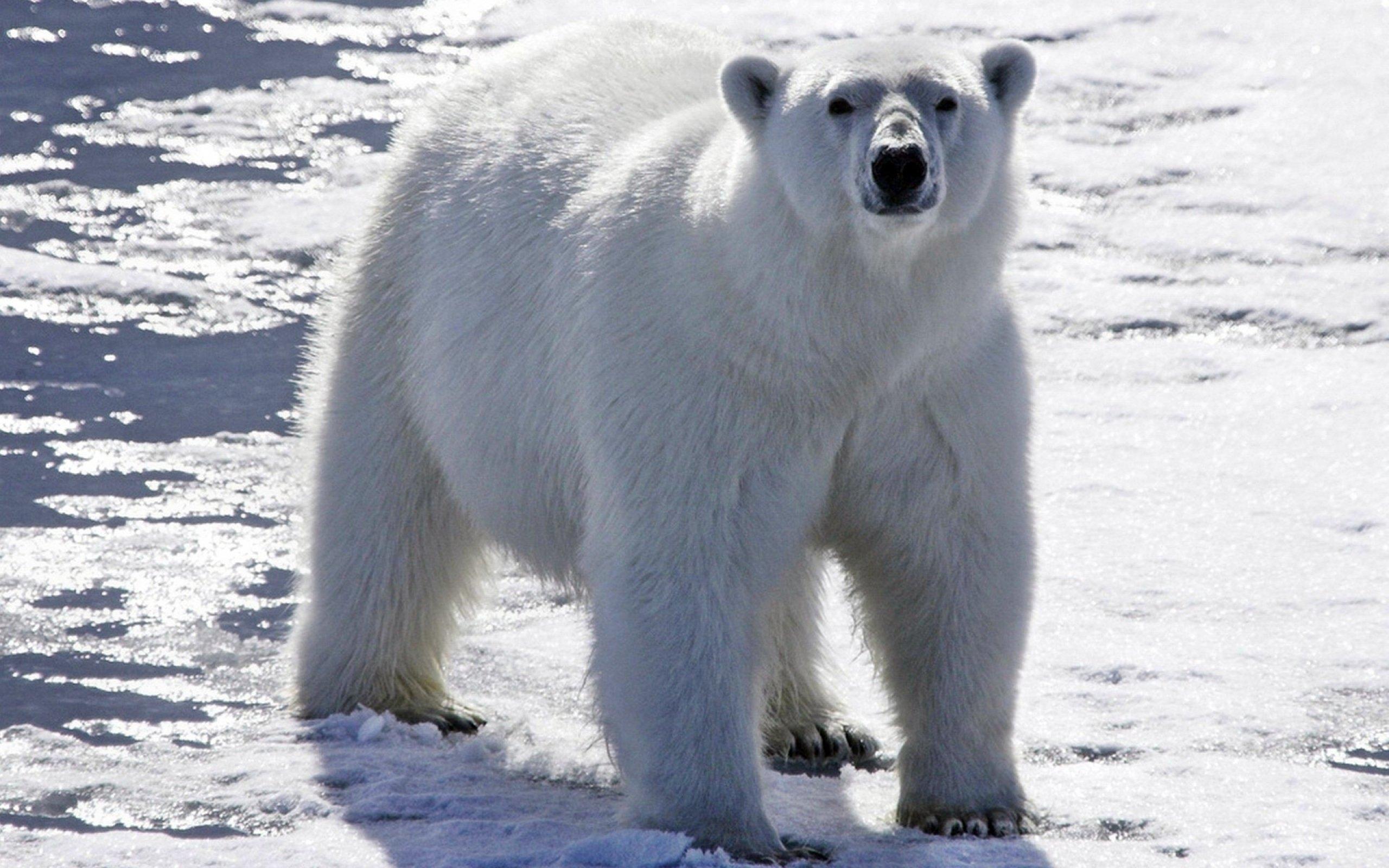 «День белого медведя» вЭтнографическом музее