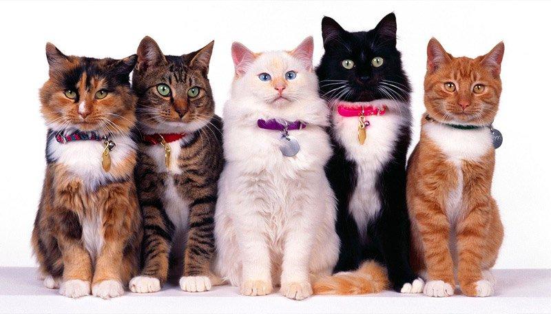 Праздник «День кошек»