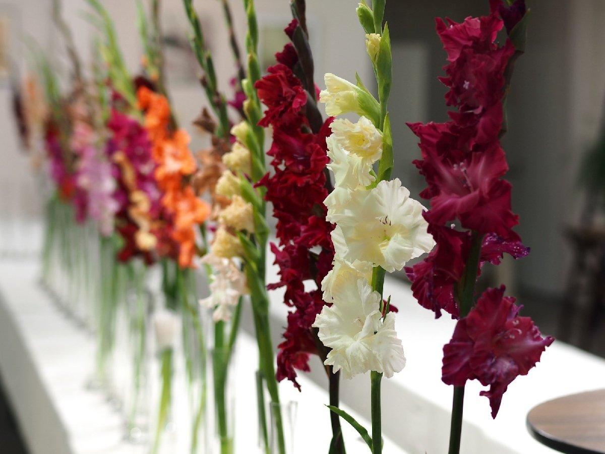 Фестиваль цветов вБотаническом саду 2017