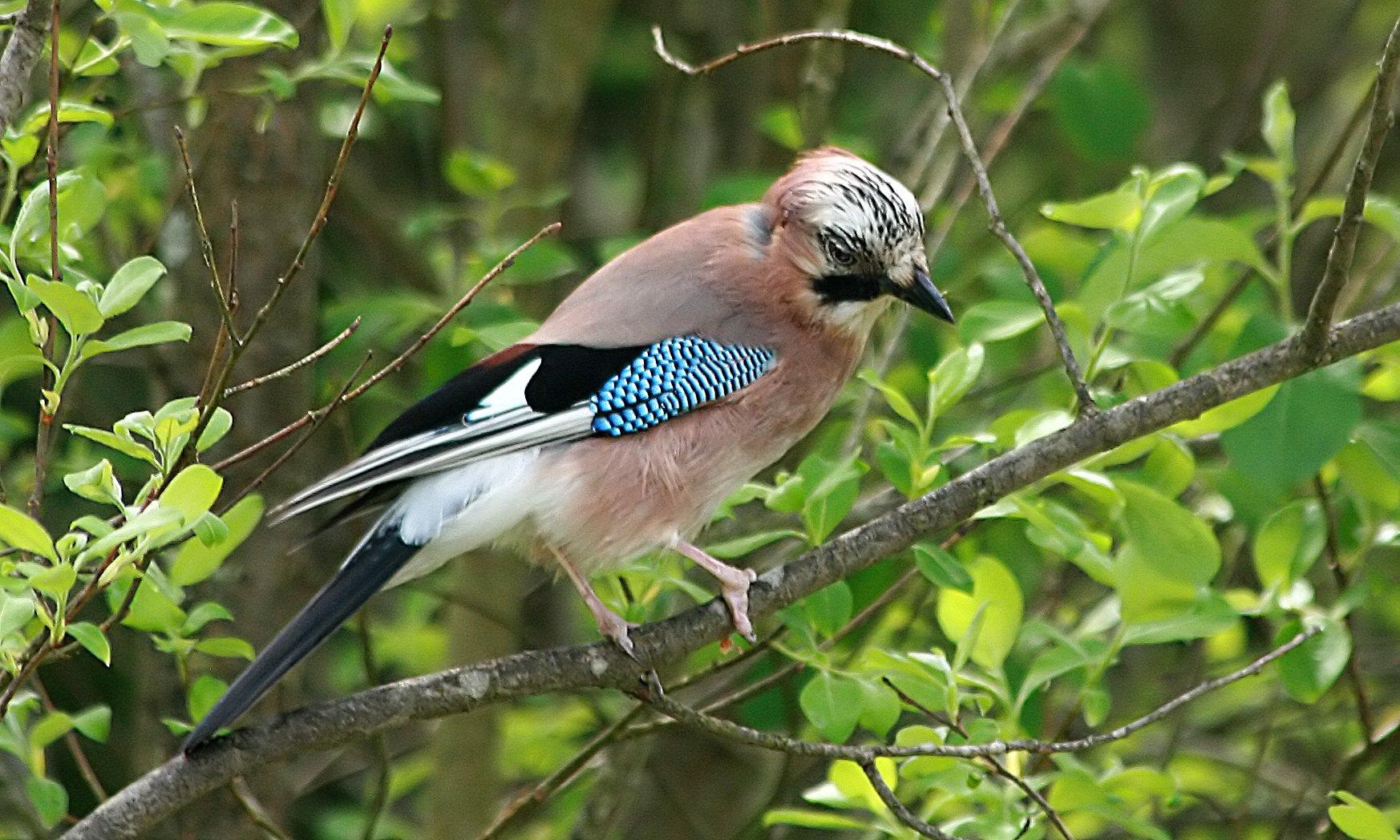 для людей лесные птицы фото с названиями пензы принадлежавший шамсуарову