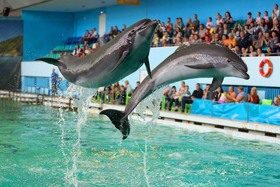 Шоу «Дельфины Северной Столицы» 2020