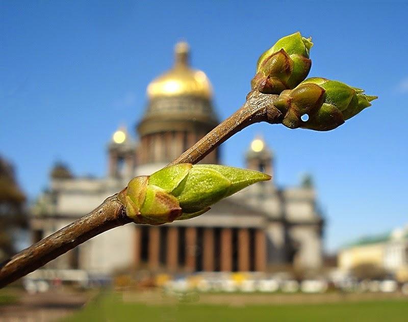 Топ-10 интересных событий вСанкт-Петербурге навыходные с29 апреля по2 мая