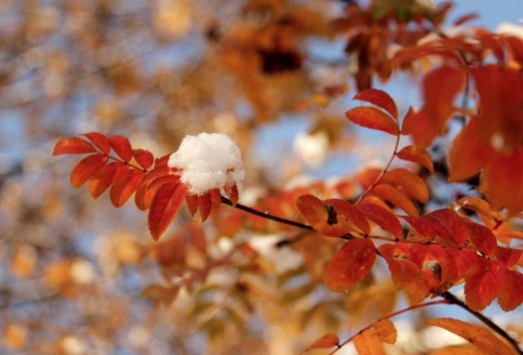 Выставка «Осенний вальс»