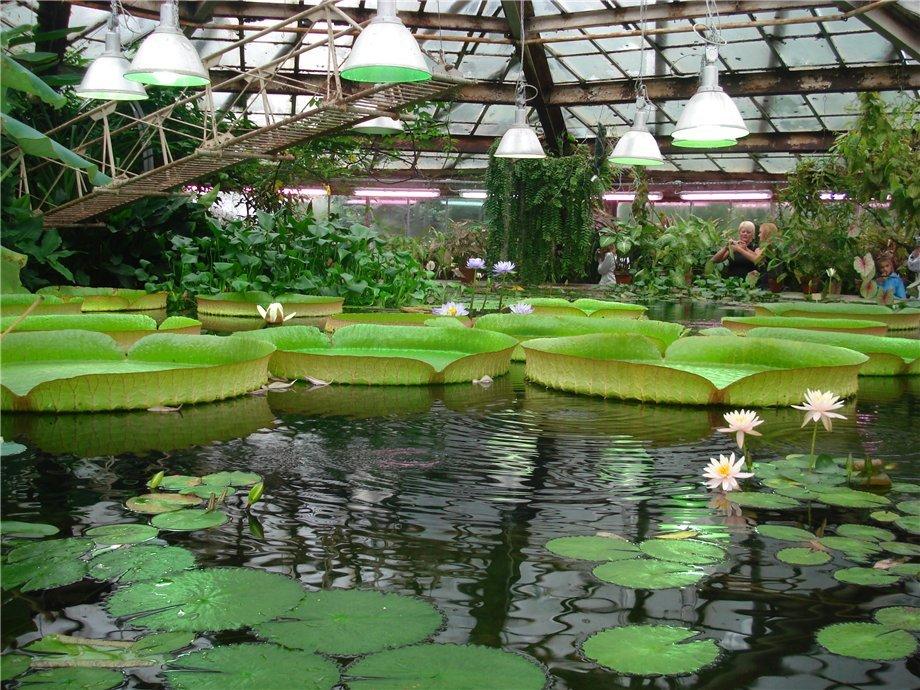 Картинки ботанического сада в спб, год