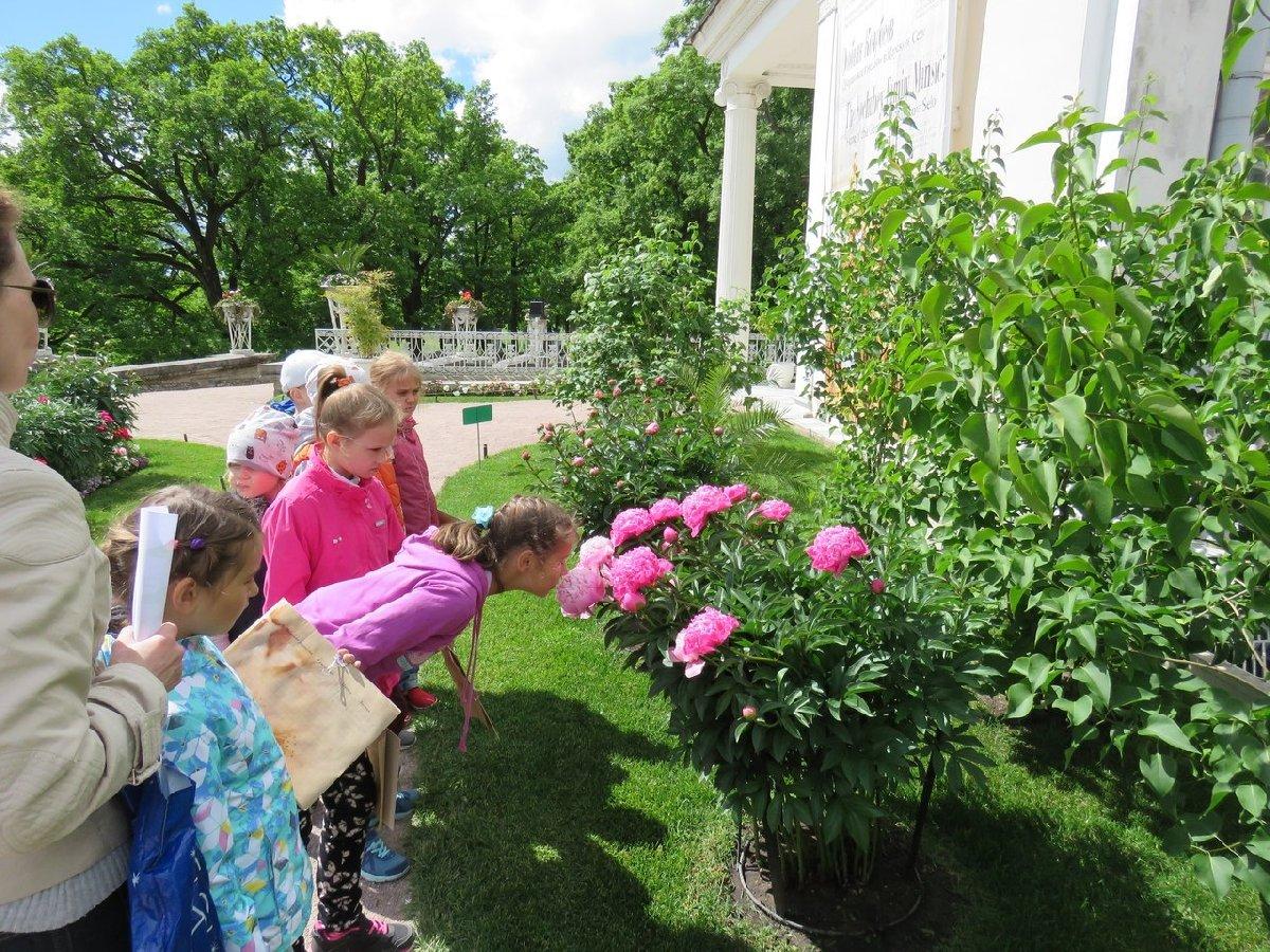 Программа для детей Царскосельские «Дачные сезоны»