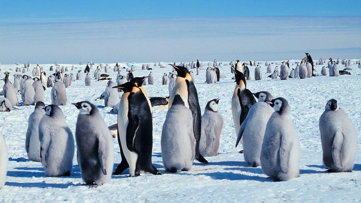 Выставка «Антарктида: два века исследования»