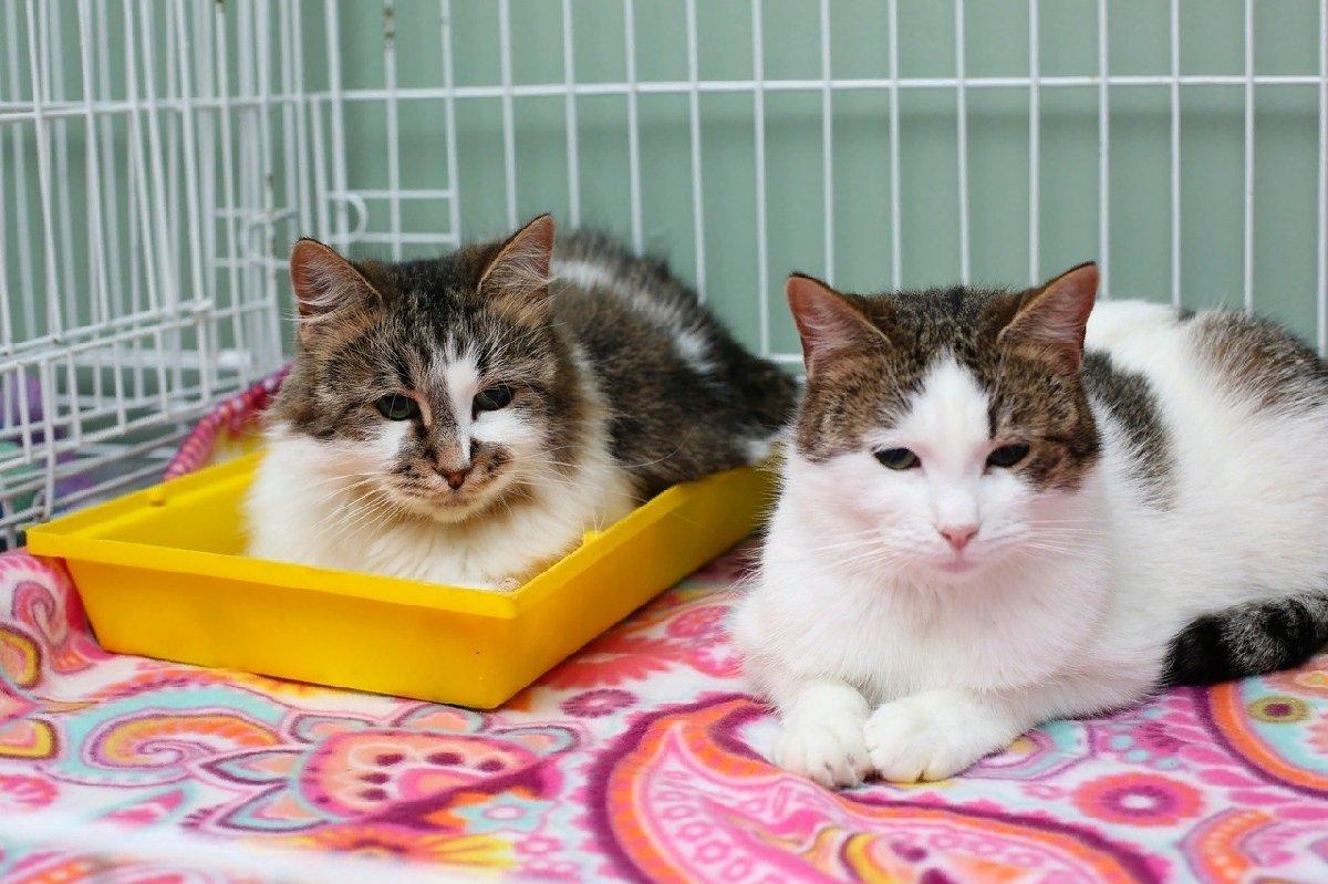 Выставка-пристройство кошек «Кот Морган рекомендует себя»