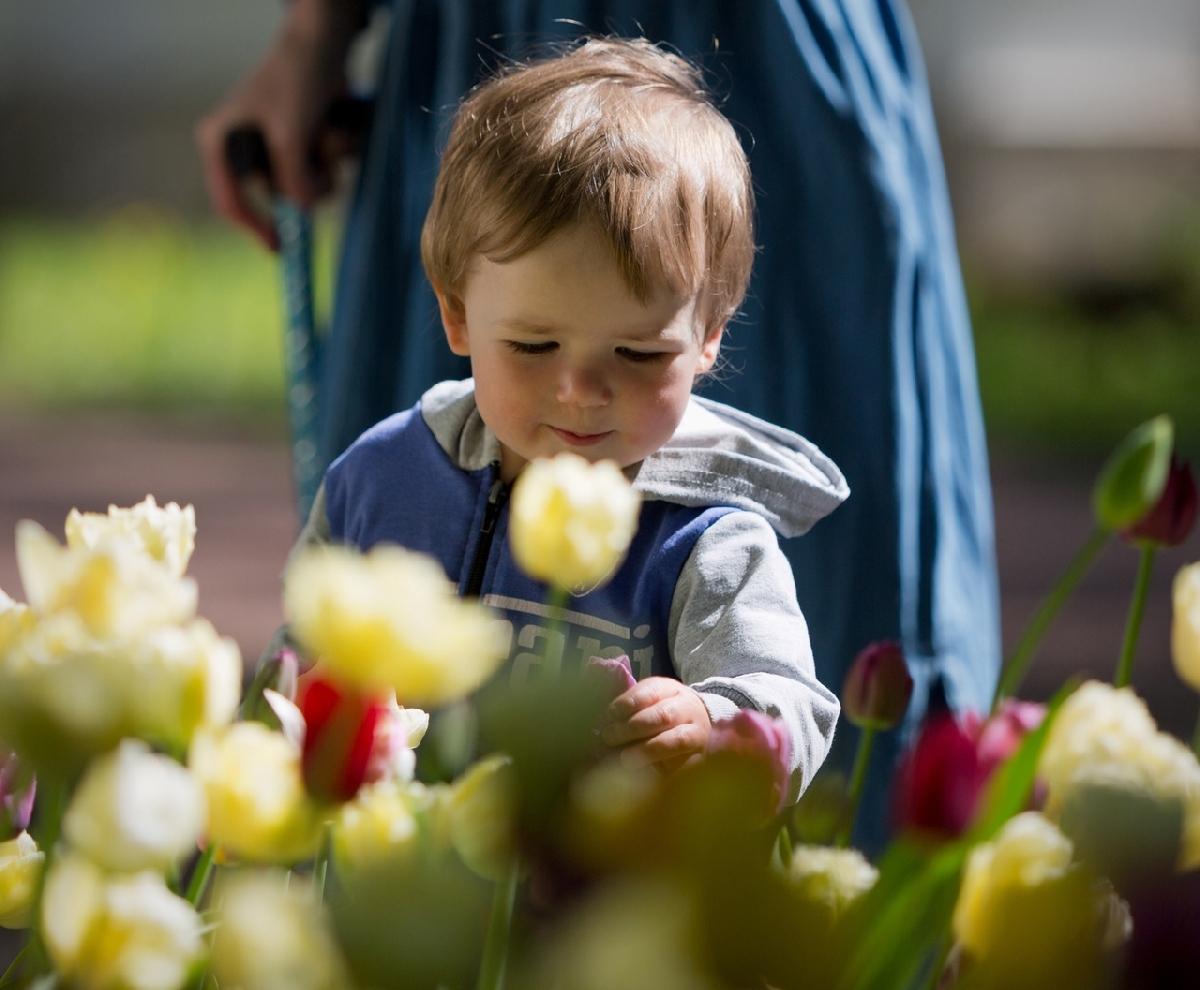 Фестиваль тюльпанов наЕлагином острове 2021