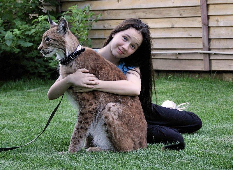 Фестиваль «Рысь идикие кошки»